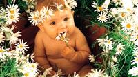 nombres-flores